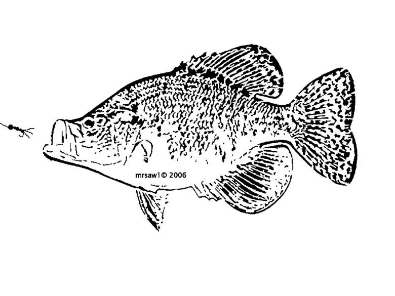 Perch Fish Coloring Page Sketch